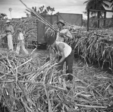 Sugar cane being loaded onto a train for transportation to the refinery. Near Ponce, Puerto Rico
